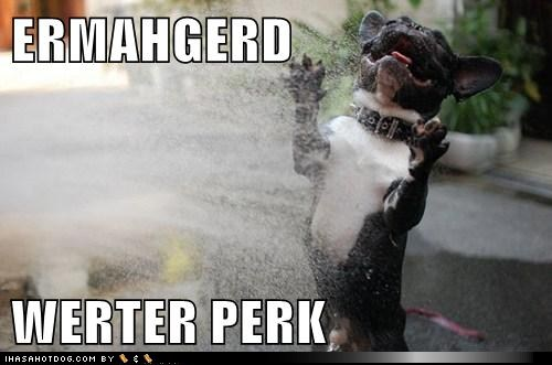 Ermahgerd Dog | www.imgkid.com - The Image Kid Has It!