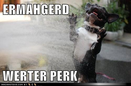 Ermahgerd Dog | www.imgkid.com - The Image Kid Has It!