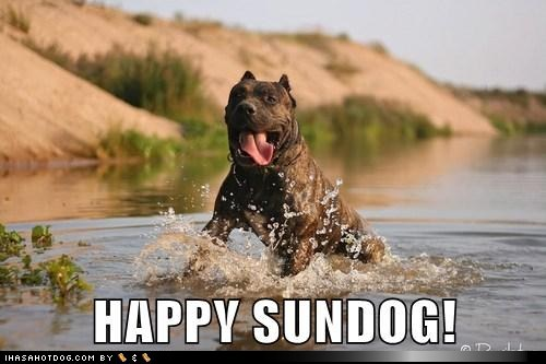 Happy Sundog...