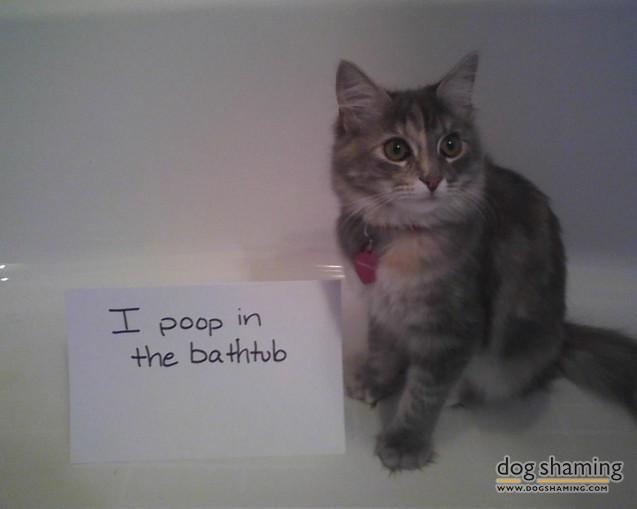 esme-poop-637x509