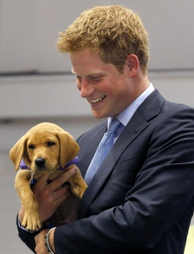 Prince-Harry-Puppy-390x512
