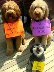 8.21.14-Best-Dog-Shaming-Photos4