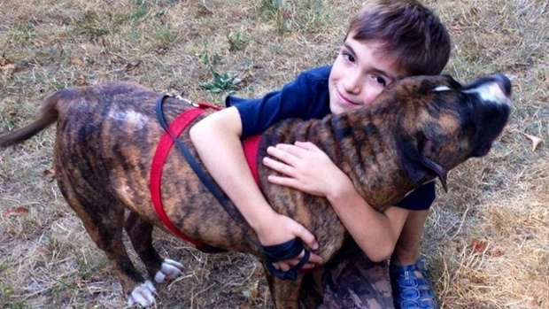 Pit-bull-saves-boy-from-bees-jpg