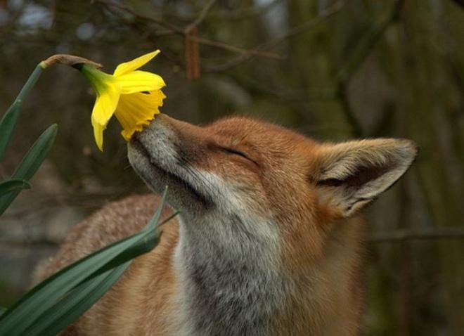fox-smelling-flower